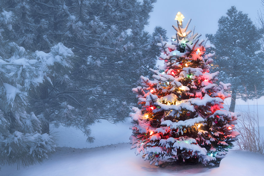 BigTreeSupply.com: Should You Keep Outdoor Tree Lights on Year-Round?