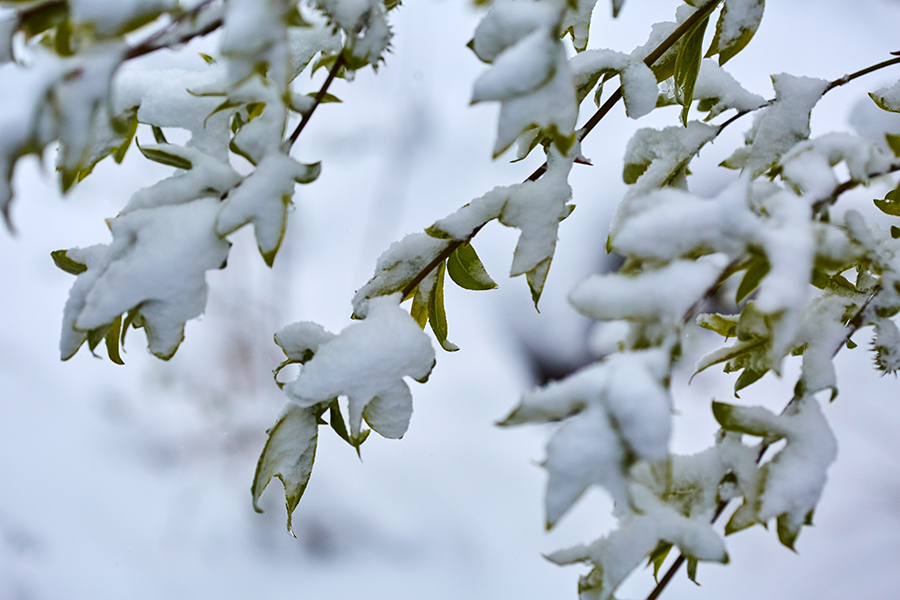 BigTreeSupply.com: Will a Late Spring Frost Damage Your Trees?