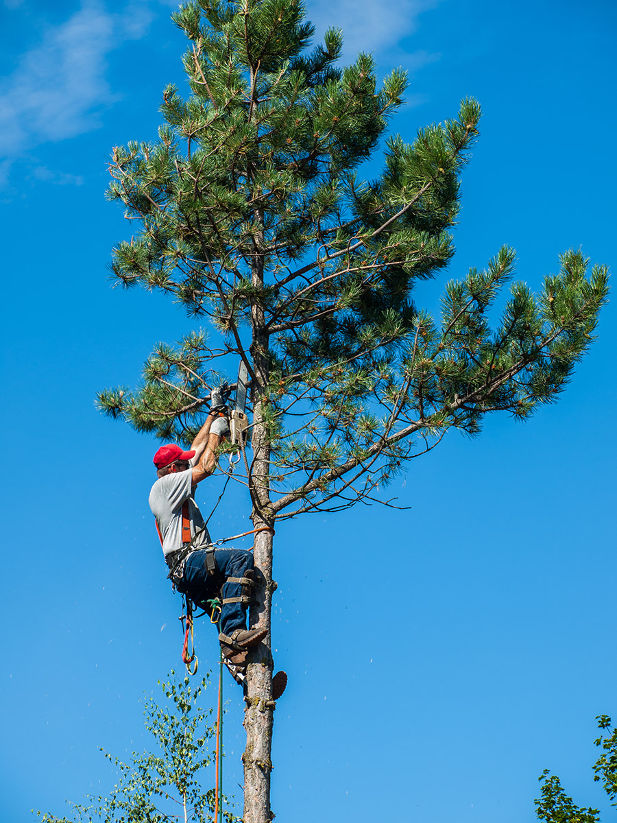 3 Reasons You Should Hire a Professional for Tree Care