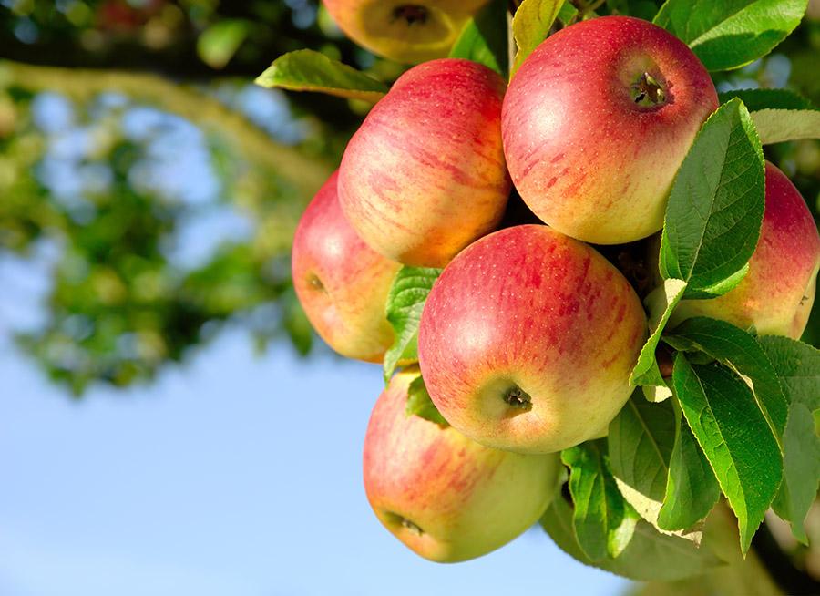 Big Trees Inc. Successfully Transplants Four Fruit Trees