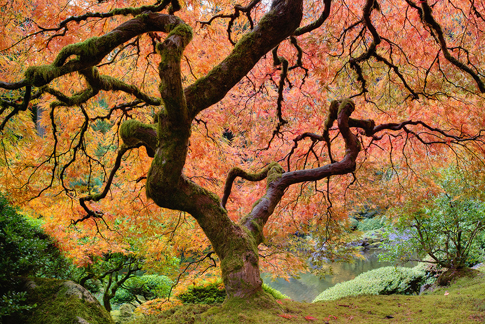 The Best Ornamental Trees for Washington